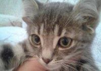 Жительница России показала кошку с 5 ушами