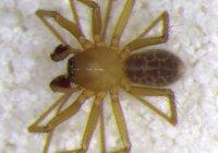 В пещерах Индии нашли новый вид пауков
