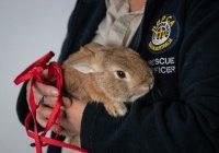 В Австралии в аэропорт вызвали саперов из-за кролика