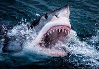 Во Флориде мужчина заглянул в пасть акуле (ВИДЕО)