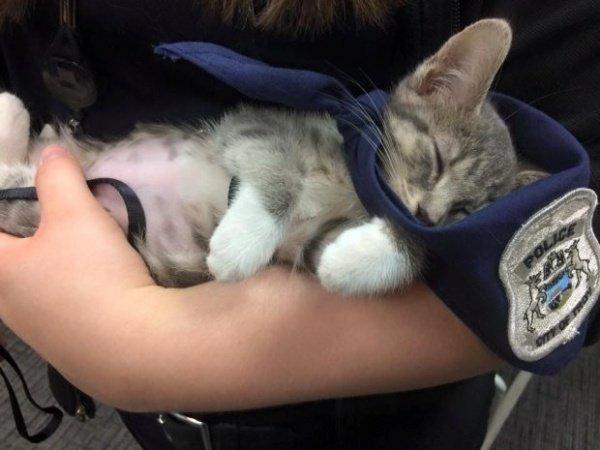 Кошку по имени Пончик наняли на работу в Департамент полиции города Трои, штат Мичиган, США
