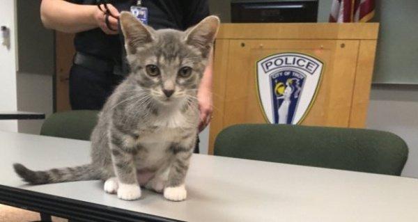 Бывший уличный котенок стал первым официальным четвероногим офицером