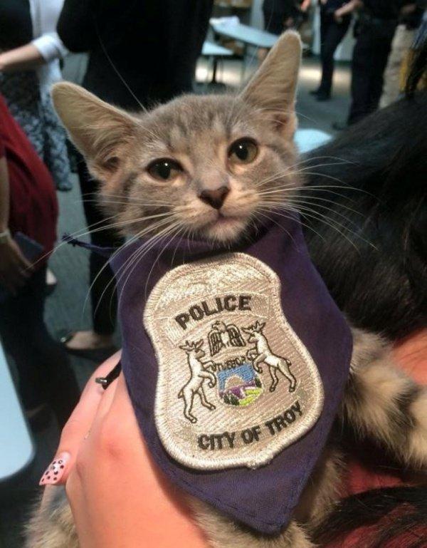 Помимо того, что она возглавляет кошачий отдел, Пончик постоянно занята общественными мероприятиями
