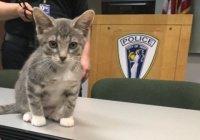 Котенок Пончик стал первым четвероногим офицером полиции (ФОТО)