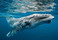 На севере Камчатки погиб краснокнижный кит