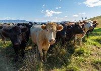 В Хакасии стадо коров погибло от удара молнии