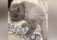 В Перми хозяева бросили кота ради отпуска