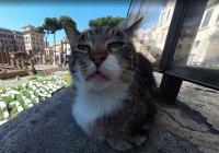 Кот влез в панораму Google-карт и стал звездой (ФОТО)