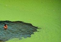 Найдены самые грязные реки планеты