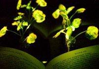 Светящиеся растения появятся на Земле