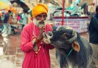 В штате Индии животные получили права