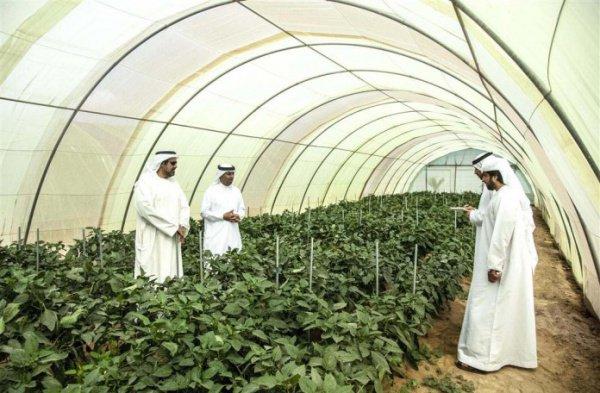 ОАЭ готовятся побить сельскохозяйственный рекорд.