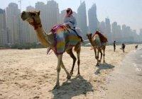 Женские отряды спасателей появятся на пляжах Дубая