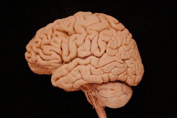 Использование подобного материала позволяет нормализовать процесс синтеза и обмена нескольких типов белков, жизненно важных для работы головного мозга