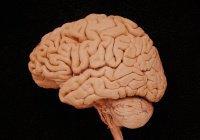 Ученые «починят» мозг при помощи квантовых частиц
