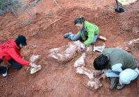 Найден первый на Земле динозавр-гигант (ВИДЕО)