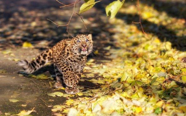 Котенка леопарда взяла под свою опеку собака по имени Шери