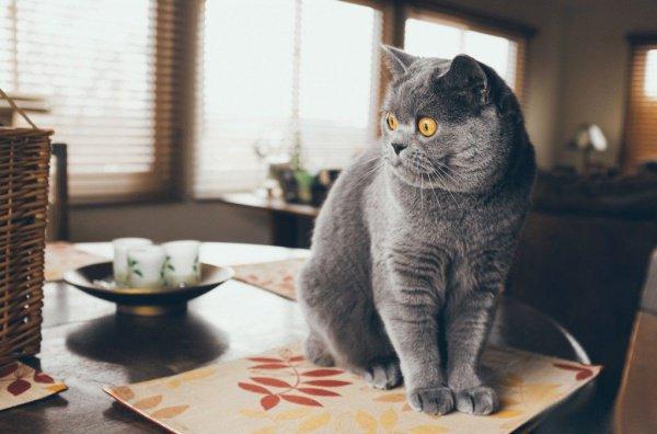 В Новосибирске домашняя кошка кормит 3 хищников