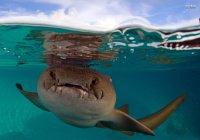 На Багамах безопасная акула почти откусила девушке руку