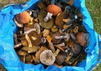 Эксперты советуют не собирать грибы в пакеты