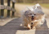 В Сибири собаке вживили «призрачный» имплант
