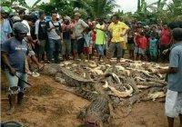 В Индонезии толпа убила 300 крокодилов