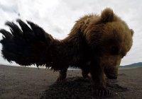 В Японии мужчина подрался с диким медведем
