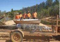 Рекордного крокодила поймали в Австралии (ВИДЕО)