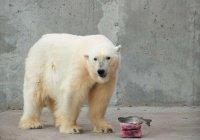 Ледяные торты готовят для животных в Петербурге