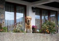 В Сибири собака неделю прожила на балконе