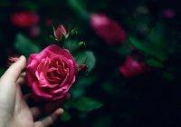 10 фактов о третьей жене Пророка Мухаммада (мир ему) Аише (р.а.)