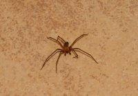 Жительница США лишилась ноги из-за паука