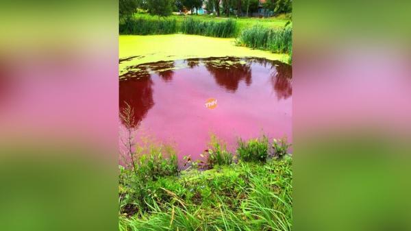 Точные данные о причинах покраснения водного объекта поможет установить специальная экспертиза
