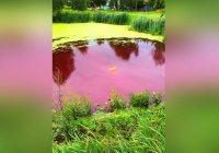 В Нижегородской области покраснело болото