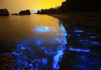 Кислотность океана побьет рекорд, державшийся 14 млн. лет