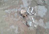 В Киргизии нашли могилу воина V-IV веков до н.э.