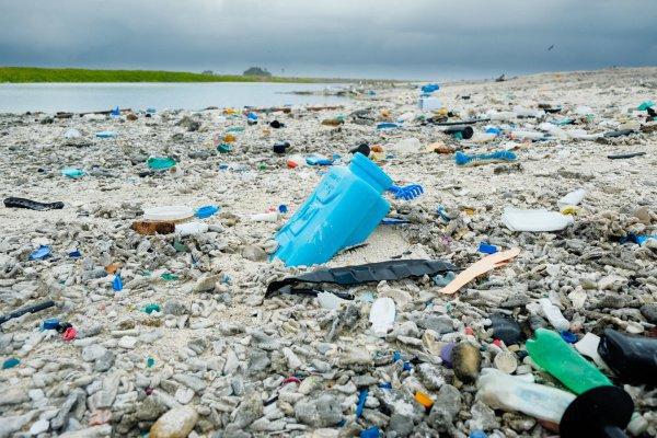 Токсический эффект от содержания в воде наночастиц пластика достигается уже при концентрации в 100 мг на литр жидкости