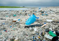 Ученые: Мировой океан умирает