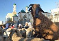 В Австрии хотят запретить ритуальный забой скота
