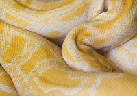 В Лондоне женщина проснулась в постели со змеей