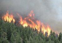 Из-за грозы загорелись леса в Забайкалье