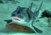 Акулу похитили из океанариума в Техасе (ВИДЕО)