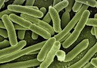 Почти 1,5 миллиона линий бактерий насчитывается на Земле