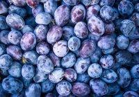 Обнаружен продукт питания, спасающий от рака