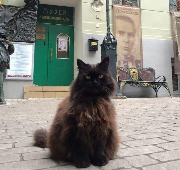 Измузея-театра «Булгаковский дом» украли кота Бегемота