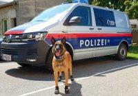 В Австрии из-за погоды собак обули в ботинки