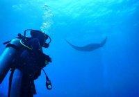 Потрясающие фото подводного мира от мусульманки-дайвера