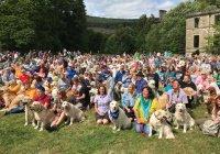 Фестиваль золотистых ретриверов состоялся в Шотландии (ФОТО)