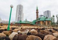 В мечетях Казани продолжается подготовка к Курбан-байрам