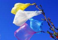 Полиэтиленовые пакеты официально запретили в Чили
